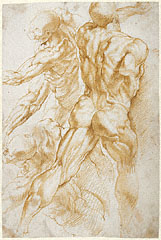 Anatomical Studies / Rubens