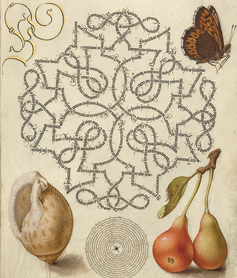 Butterfly, Marine Mollusk, and Pear, from Model Book of Calligraphy (text in Latin), Vienna, about 1591-96; artist, Joris Hoefnagel and scribe, Georg Bocskay. The J. Paul Getty Museum