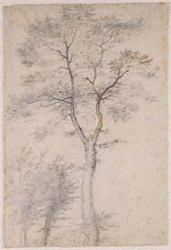 Three Studies of Trees / Bartolommeo