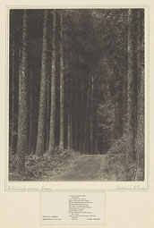 In Redlands Woods, Surrey / F. Evans
