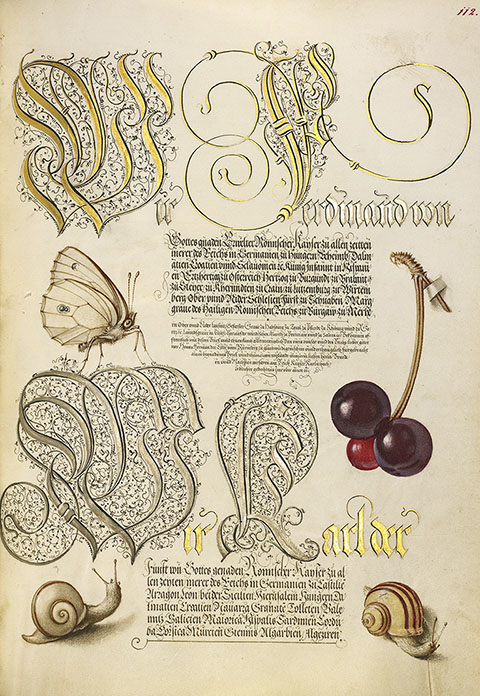 Butterfly, Sweet Cherry, and Land Snails, Model Book of Calligraphy, Vienna, Joris Hoefnagel, 1561-62 (text) and about 1591-96 (illumination)