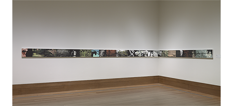 Installation View: Spill, 2009, Liza Ryan, inkjet prints with india ink and graphite. The J. Paul Getty Museum. Gift of Manfred Heiting in honor of Hanna Wise Heiting. © Liza Ryan