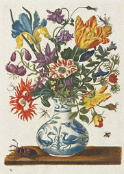 Spring Flowers in a Chinese Vase / Merian