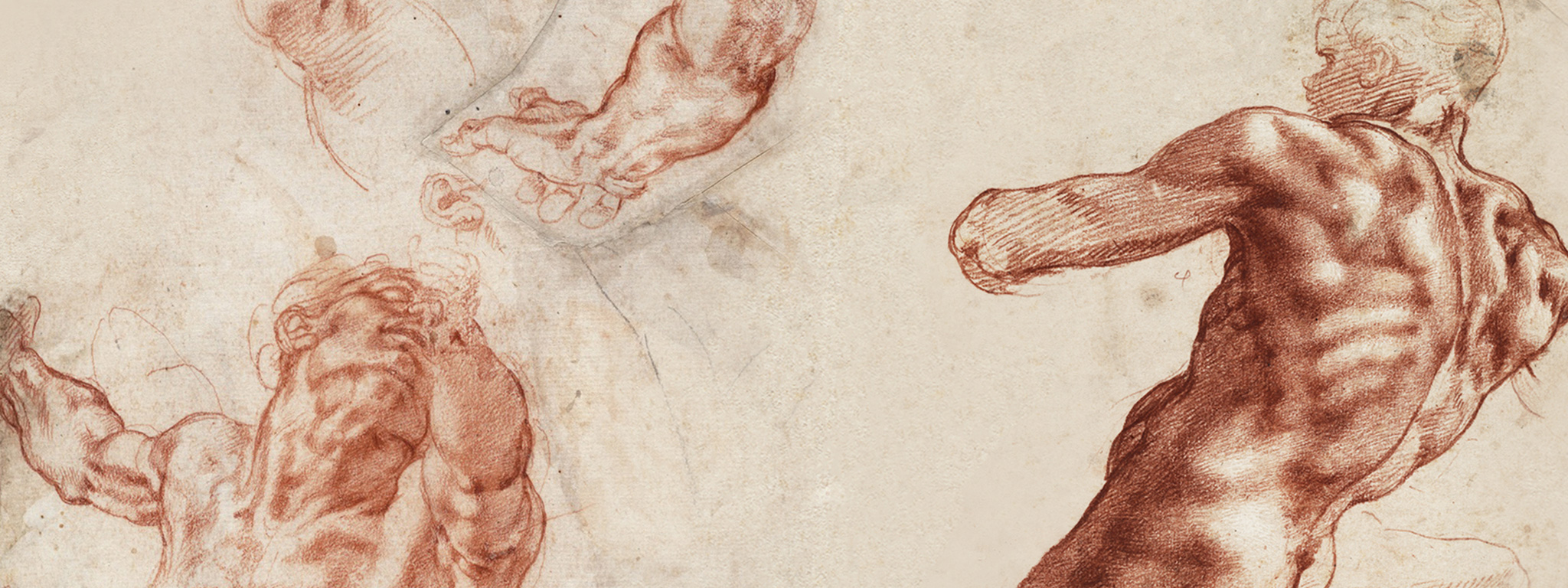 Studies of the upper body of a man and separate studies of an arm, a hand, and an ear; sketch of a tree, recto (detail), 1511–12, Michelangelo Buonarroti, red chalks and black chalk. Teylers Museum, Haarlem. Purchased in 1790. © Teylers Museum, Haarlem. Seated male nude, separate study of his right arm, recto (detail), 1511, Michelangelo Buonarroti, red chalk heightened with white. Teylers Museum, Haarlem, purchased in 1790. © Teylers Museum, Haarlem