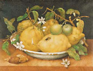 Still Life with Citrons / Garzoni