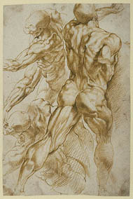 Rubens / Anatomical Studies