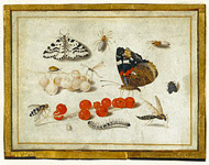 Butterflies, Insects, and Currants / van Kessel