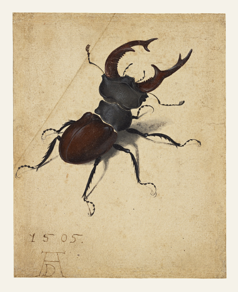 stag beetle getty museum