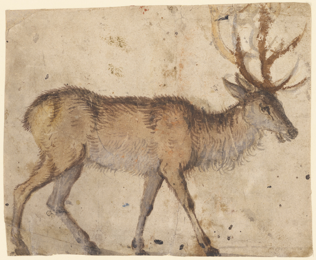 Study Of A Stag Recto Study Of Goats Verso Getty Museum