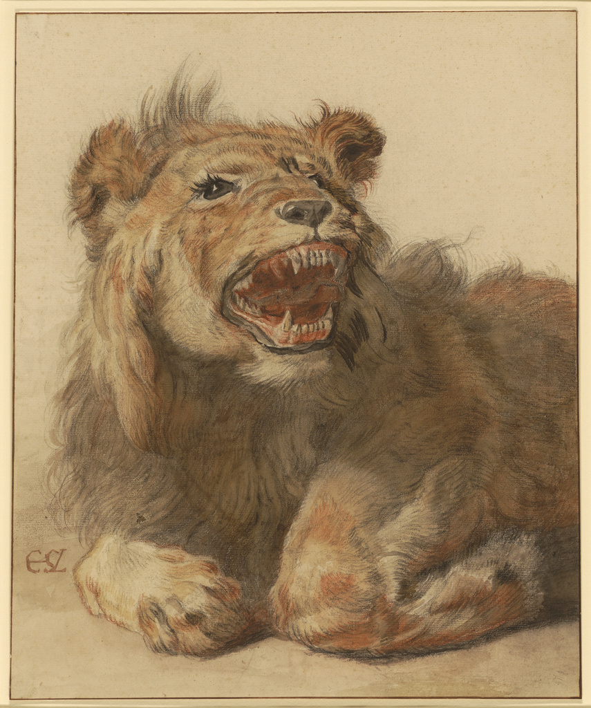 A Lion Snarling Getty Museum