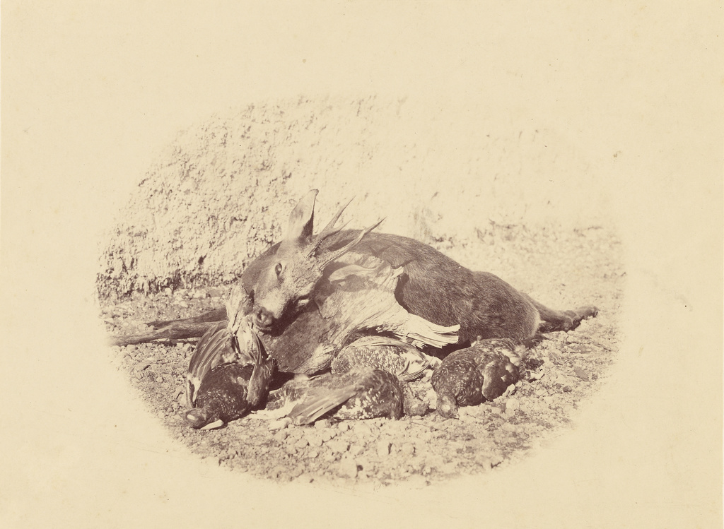 Still Life with Dead Game] (Getty Museum)