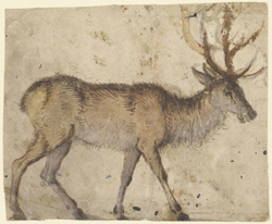 Study of a Stag / Lucas Cranach the Elder