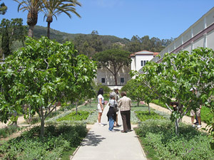 Touring the Herb Garden at the Getty Villa