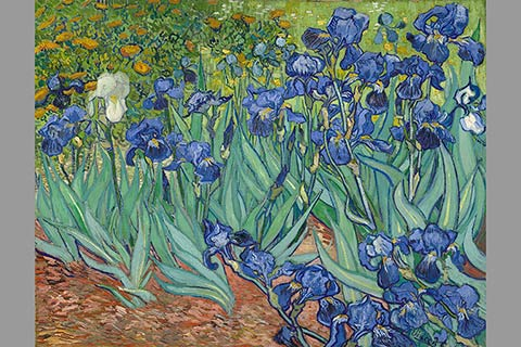 "The painting ""Irises"" by Vincent Van Gogh, 1889."