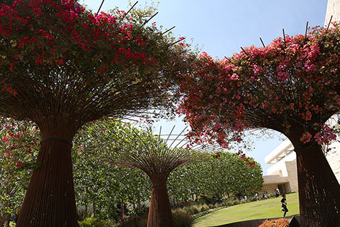 View of the bougainvillea arbors in the plaza of the Central Garden.